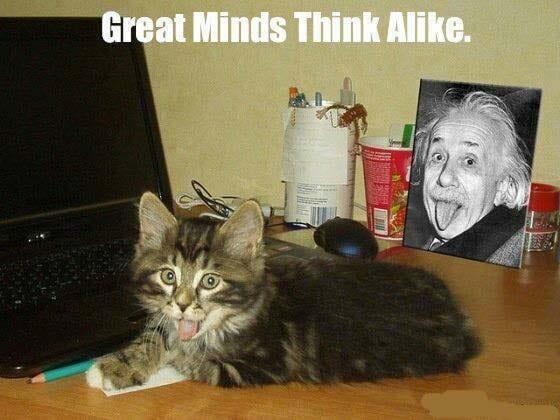 genius-cat