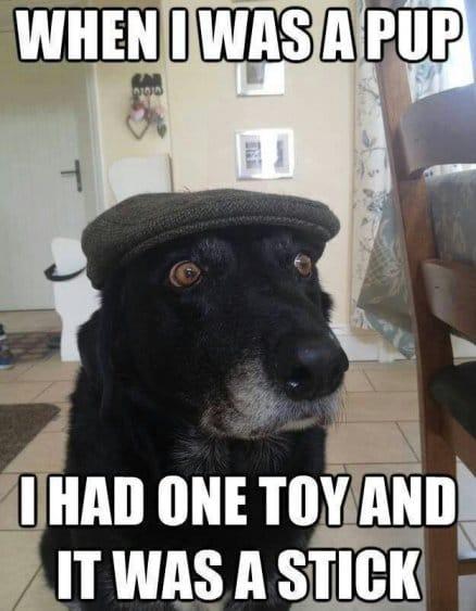 granpa-dog