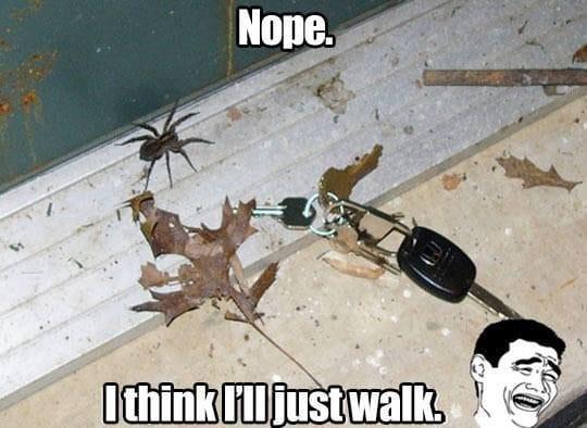 i-think-ill-just-walk