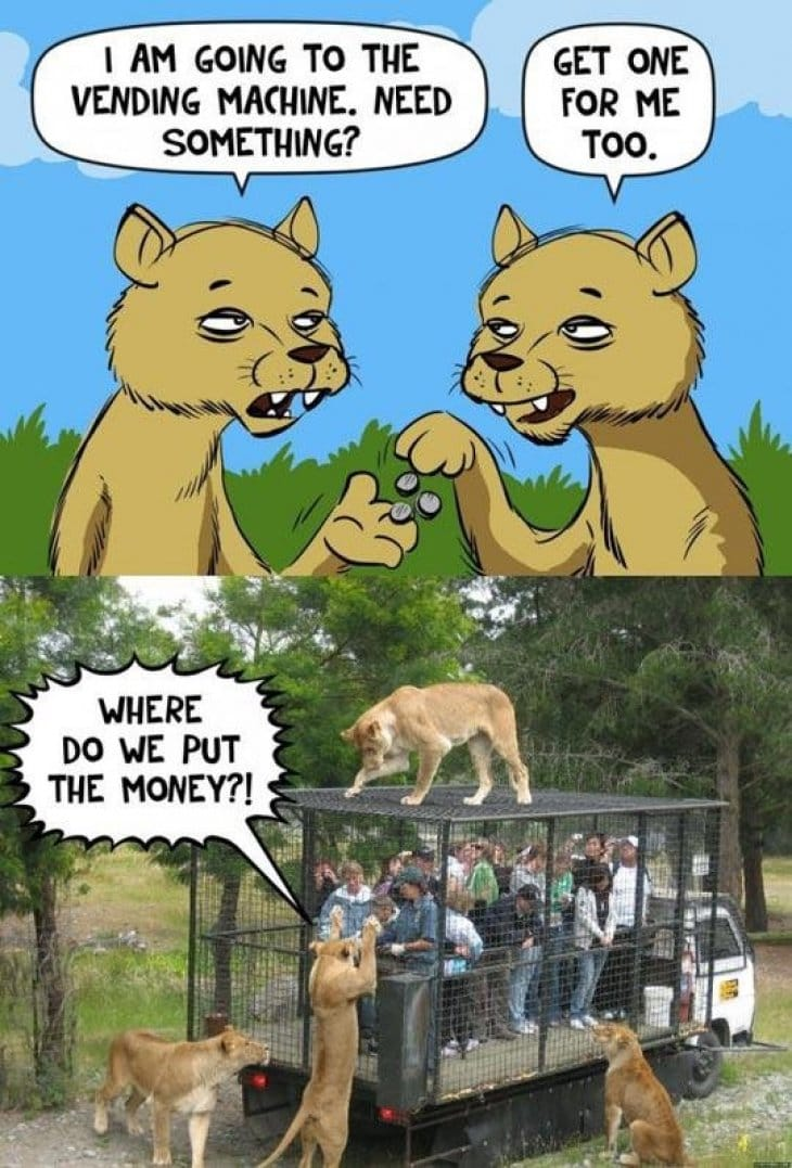 lions-at-the-vending-machine