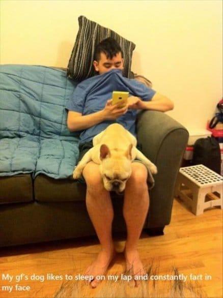my-gfs-dog
