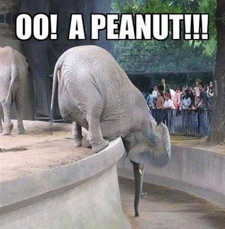 oo-a-peanut