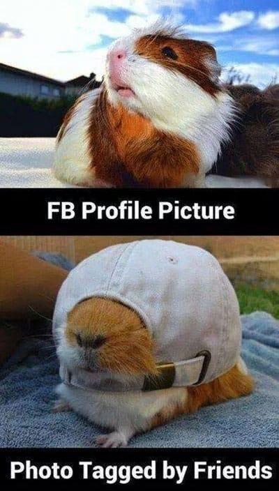 pics-on-social-network