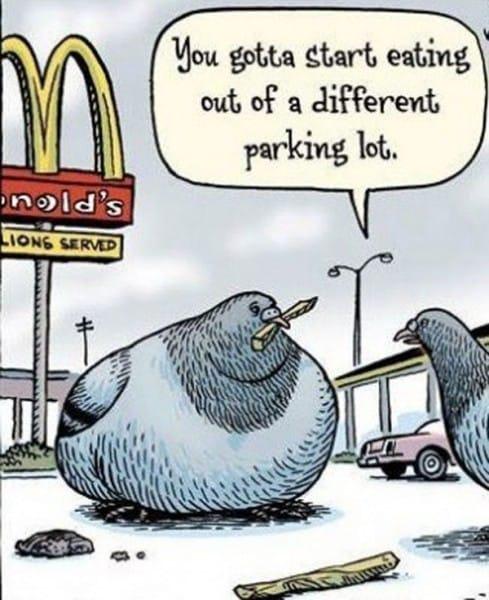 pigeons-talk