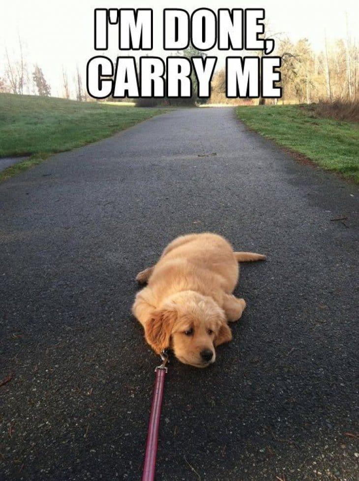 Punished for taking him on long walks