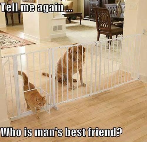 said-he-to-the-dog