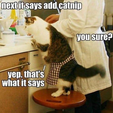 addicted-cat