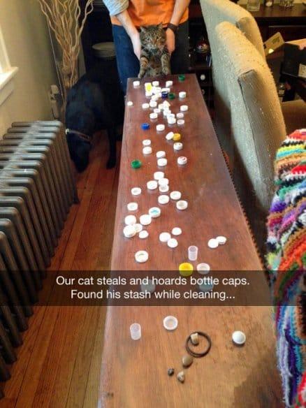 cat-steals-bottle-caps