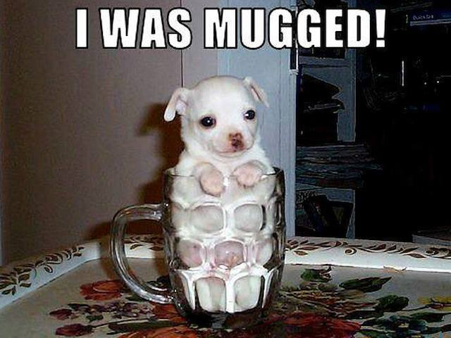 You Got It Animal Meme Got mugged.