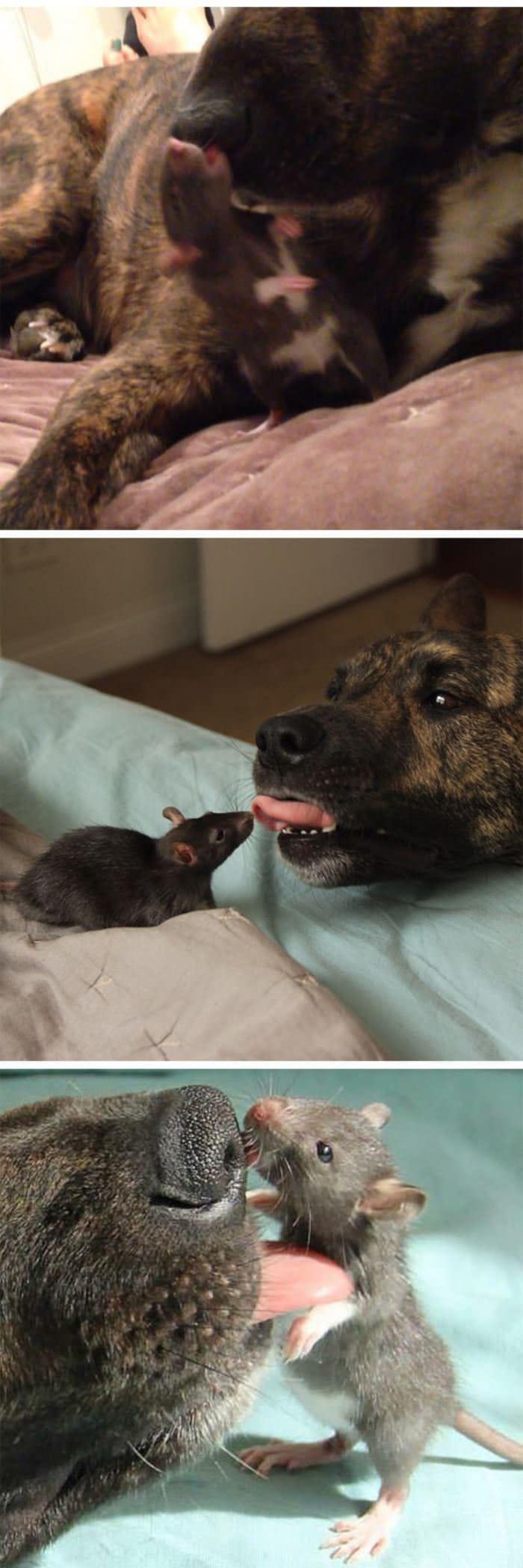 heavy-petting
