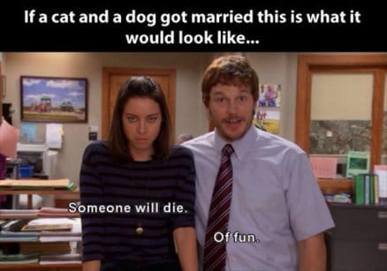if-cat-and-dog-got-married-lmfao