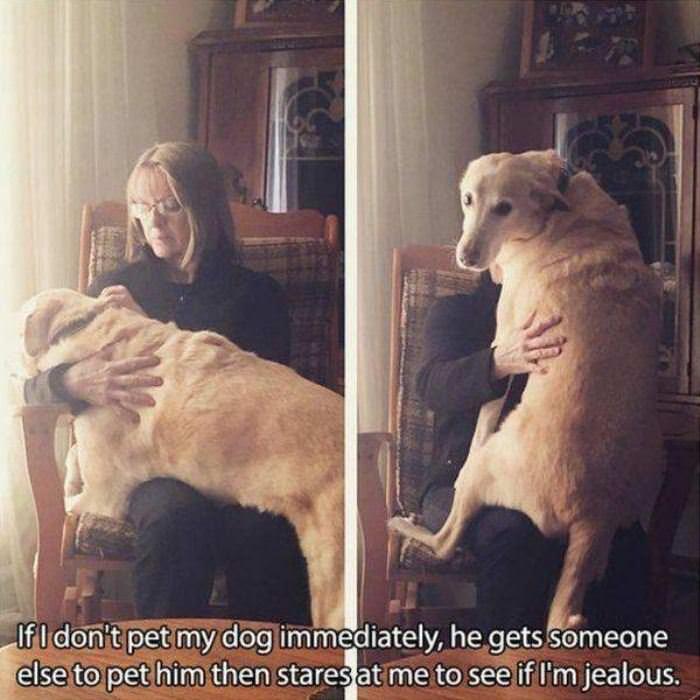 ive-got-to-pet-him