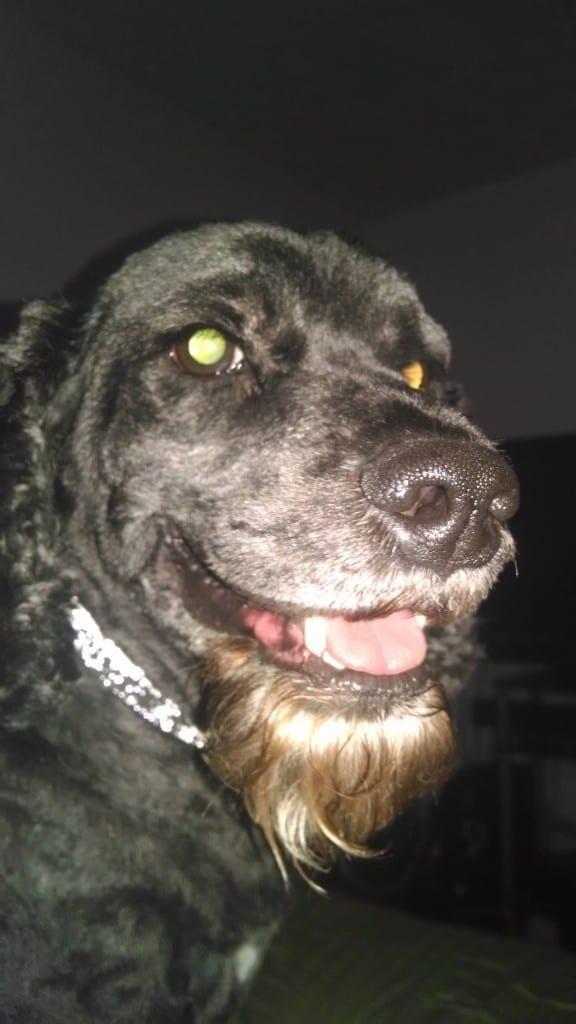 dog-with-a-goatee