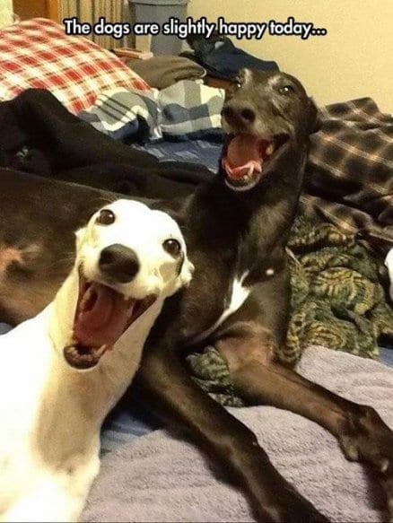 happy-dogs
