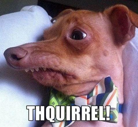 thquirrel