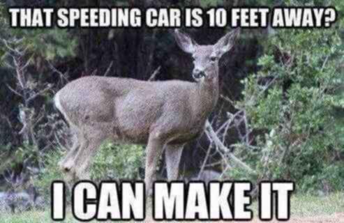 deers-be-like