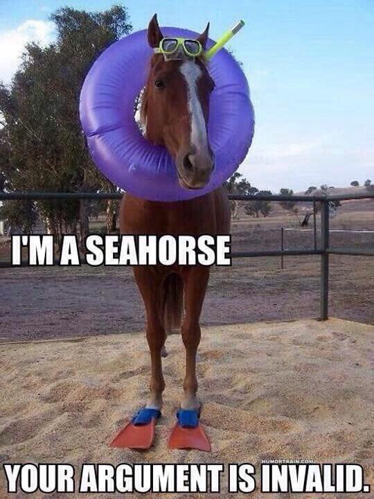 im-a-seahorse