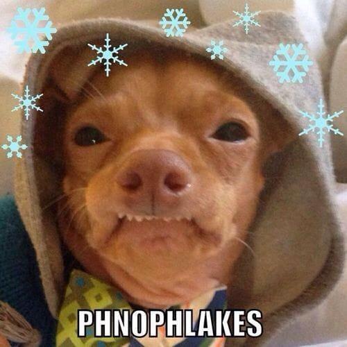phnophlakes