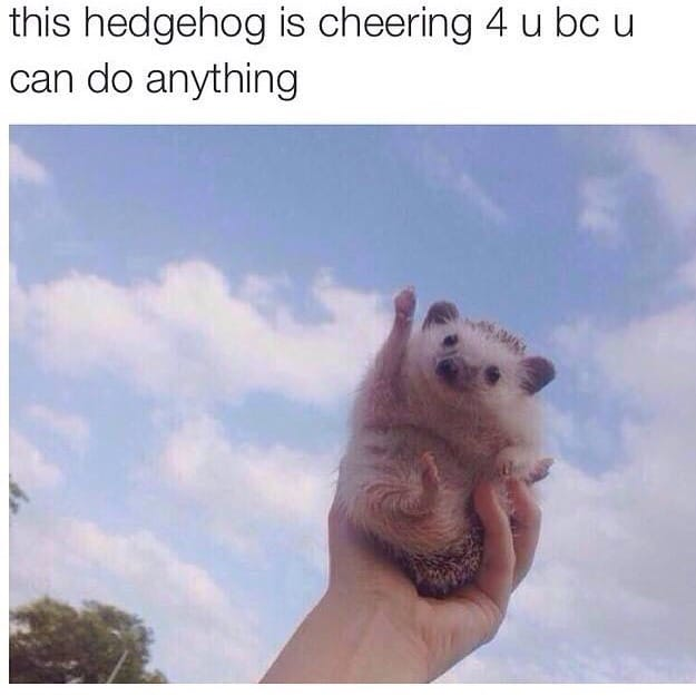 this-hedgehog-is-cheering-for-you