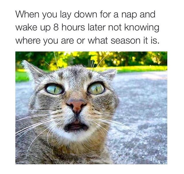 you-lay-down-for-a-nap