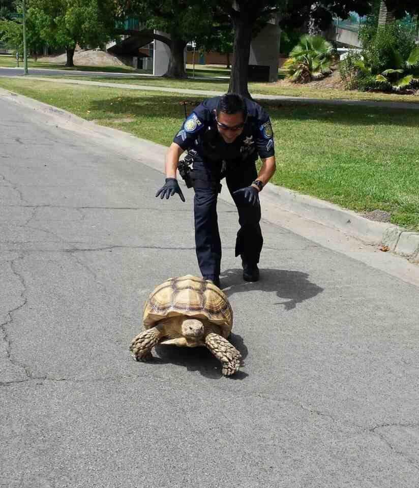 cops-be-like
