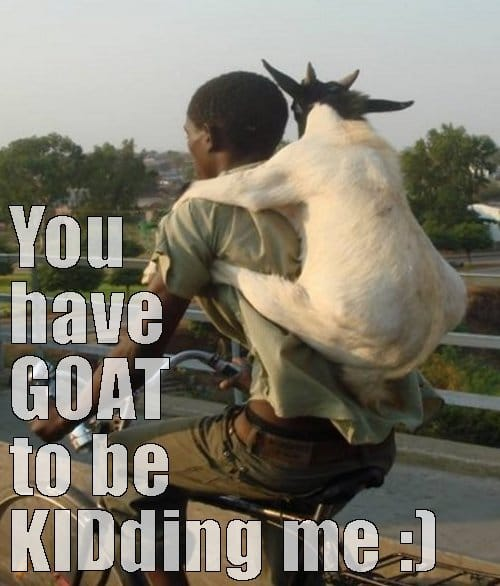 you-have-goat-to-be-kidding-me