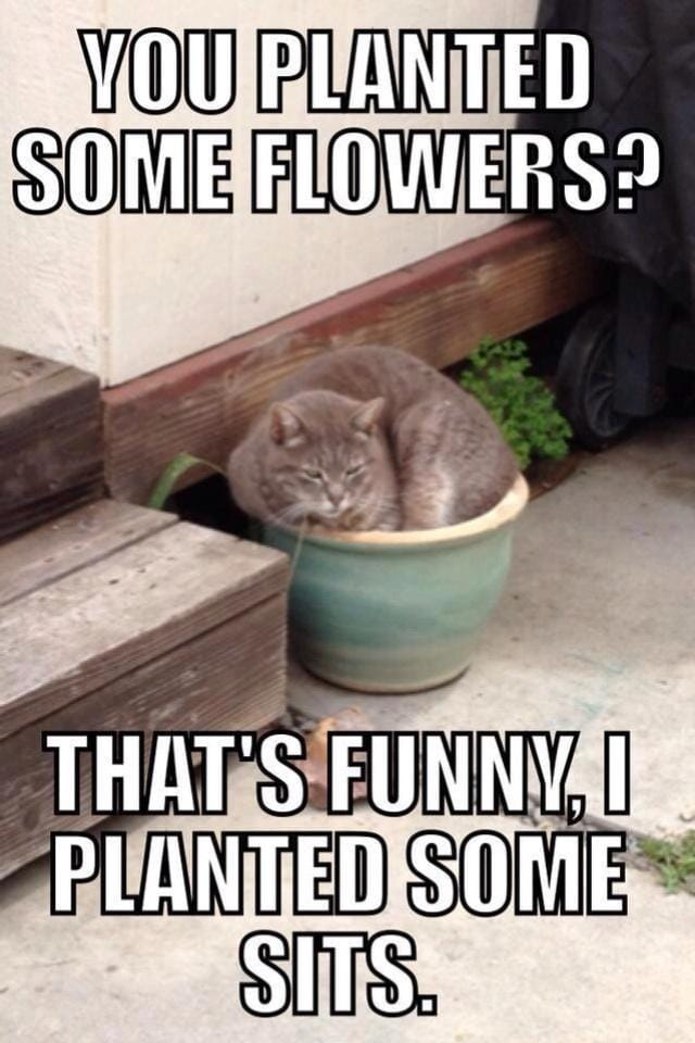 you-planted-some-flowers